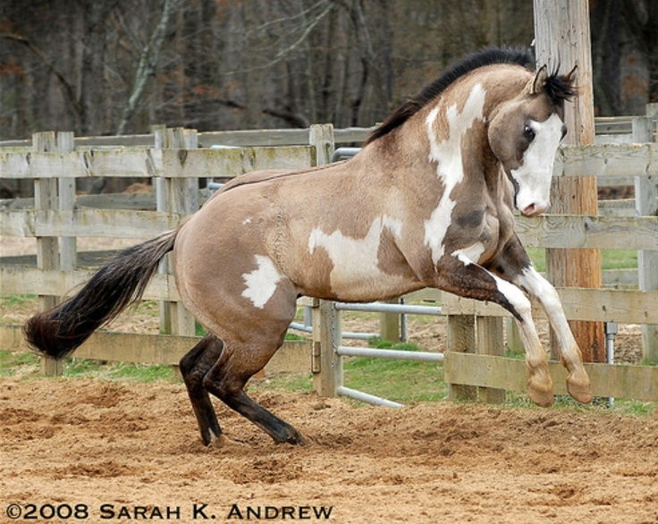 This horse... Is the most BEAUTIFUL horse I've ever seen.