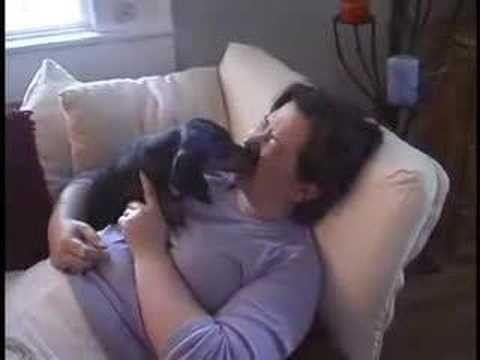 Adventures of Tabby the Dachshund - YouTube