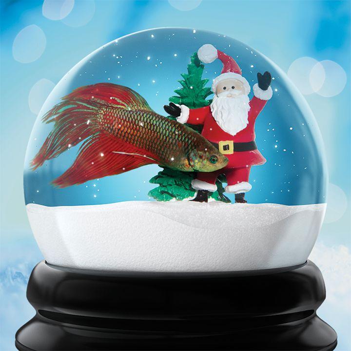 Cute Pet Fish : Pet fish, Xmas party and Cute pets on Pinterest