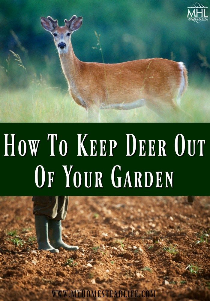 How To Keep Deer Out Of Your Garden Slugs In Garden Deer Garden