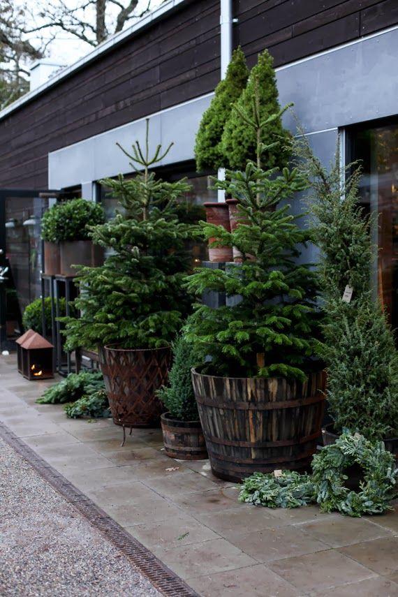 xx..tracy porter..poetic wanderlust.. potted plants -MITT VITA HUS: STOCKHOLM TUR & RETUR