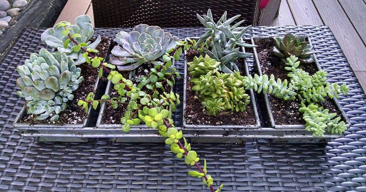 Industrial loaf pan transformed into a succulent garden.