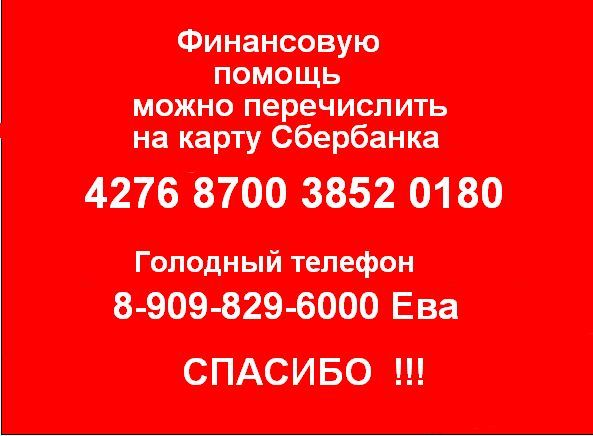 """Приют переполнен, не хватает средств! Не оставайтесь равнодушными, Ваши 100 рублей могут спасти чью-то жизнь!!!  ООЗЖ""""ЗООСПАС"""" г Комсомольска на Амуре        НАШИ РЕКВИЗИТЫ : Карта СБ  4276 8700 3852 0180 Яндекс кошелек  41001420471913 Web money R150369628360  Z441914964561                                              Голодный тел. 8909 829 6000 Спасибо всем заранее!!! Рук ООЗЖ""""ЗООСПАС"""" Асташова ЕН  тел 89242240620"""
