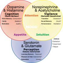 serotonin hypothesis of schizophrenia   NorepinephrineDopamineSerotonin.png
