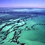 Shark Bay Shark Bay Shark Bay, #Australia – #Travel Guide
