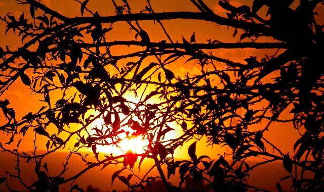 M  o   m   e   n   t   s   b   o   o   k   .   c   o   m: Πίσω απ' τα πρώτα φύλλα της αμυγδαλιάς ο ήλιος μαζ...