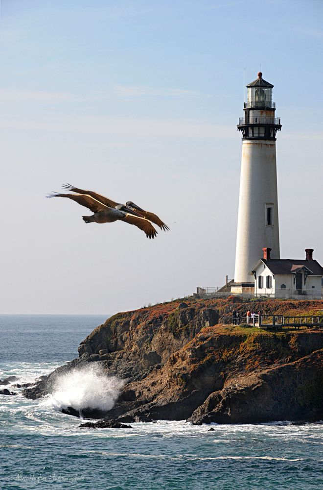 Two Pelicans at Pigeon Point, California