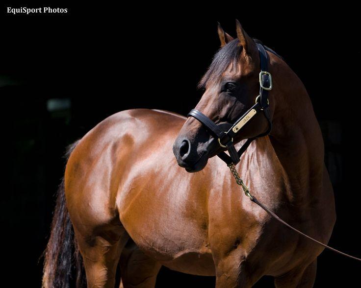 Classic Winner Jazil Dies - Horse Racing News   Paulick Report