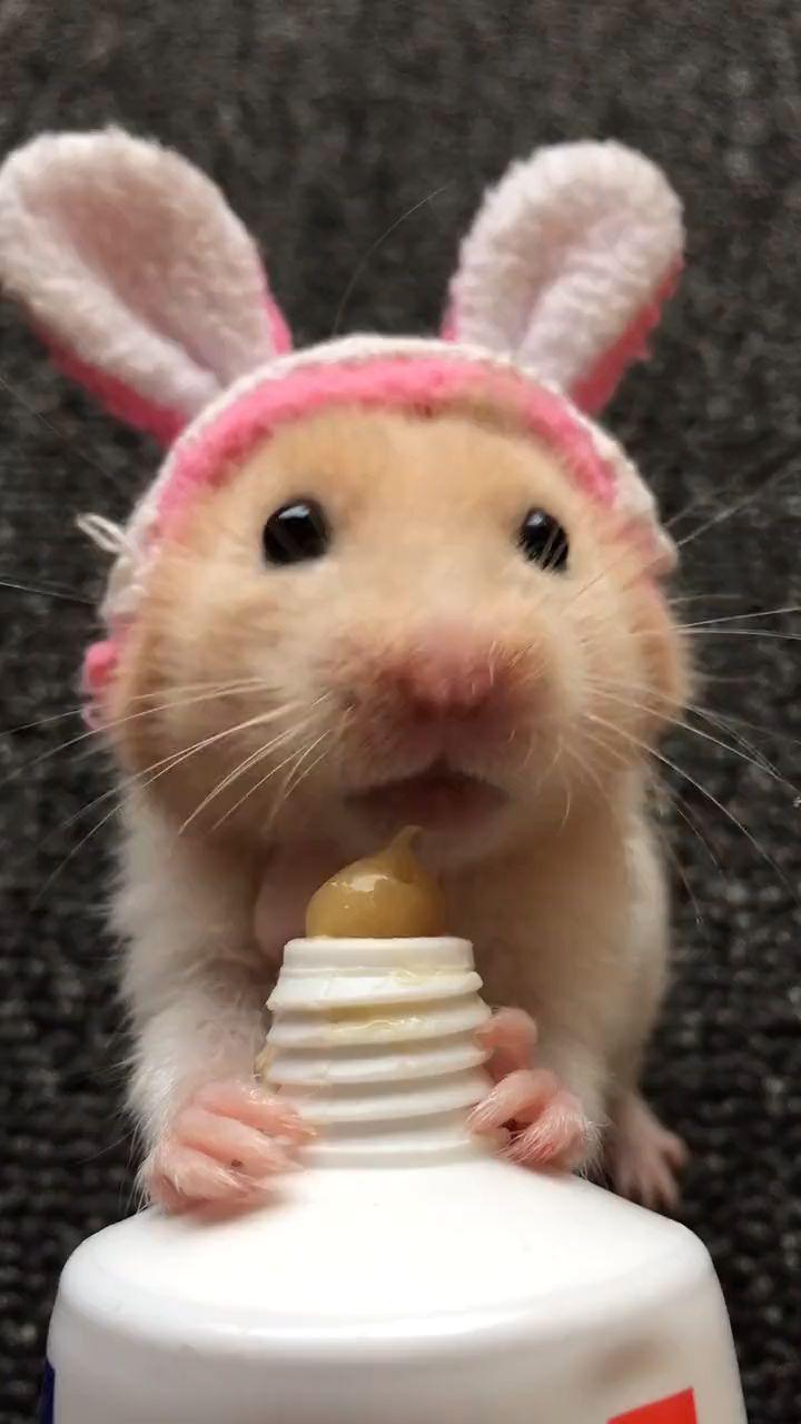 Susse Mause Lustiger Tiere Niedliche Tiere Susse Tiere Tiere