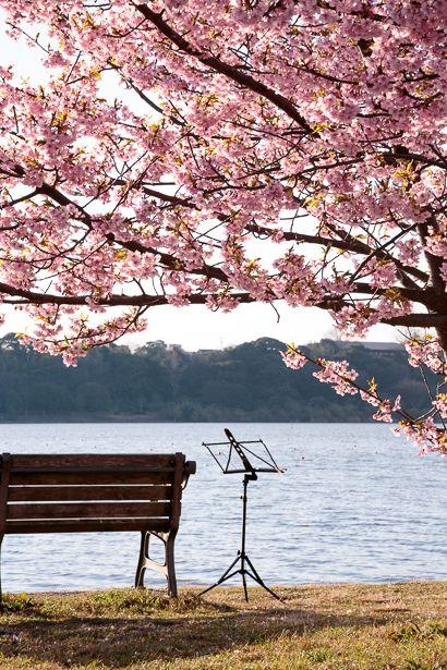 早朝の佐鳴湖畔で置き忘れた譜面台を見つけました。 朝露に濡れたその佇まいは美しく 音楽まで聞こえ...