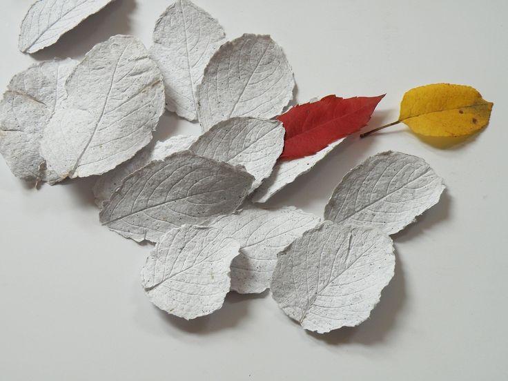 Spadané listy