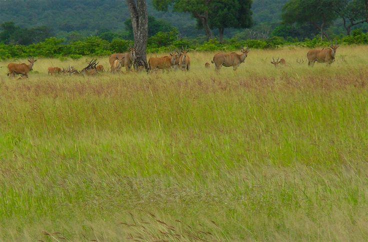 Mikumi National Park & Udzungwa Rain Forest Safari. http://bit.ly/tanzanasafaritours?utm_content=buffer3d3a4&utm_medium=social&utm_source=pinterest.com&utm_campaign=buffer