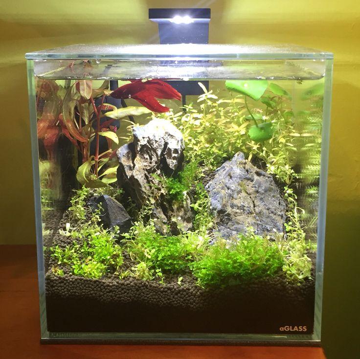 Betta fish tank nano 10 litros aquascaping pinterest for Betta fish supplies