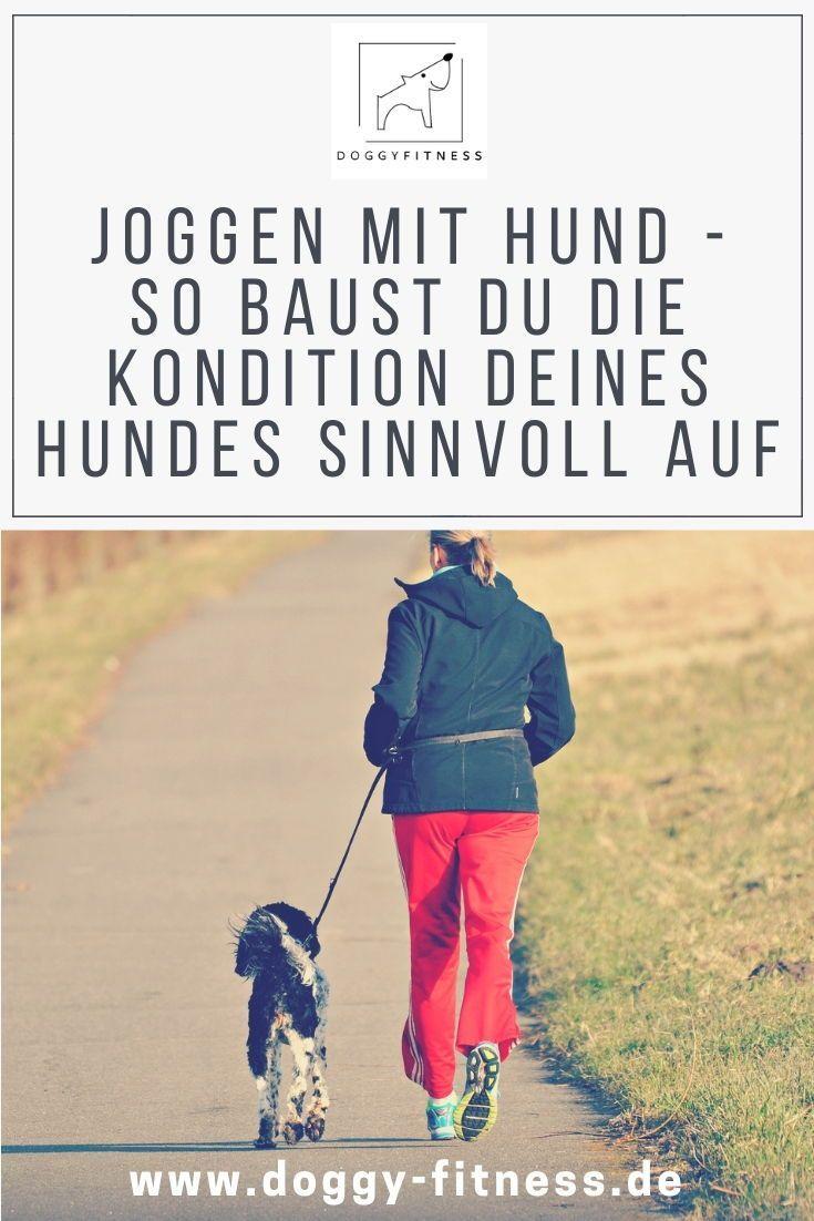 Joggen Mit Hund Das Solltest Du Wissen Doggy Fitness Hunde Joggen Hundegesundheit