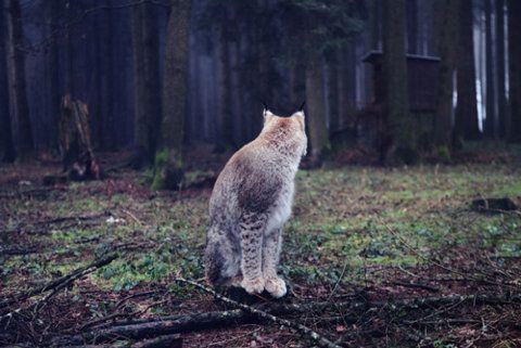 WILD #cat