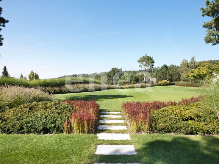 16 best imperata cylindrica images on pinterest for Natural grasses for landscaping