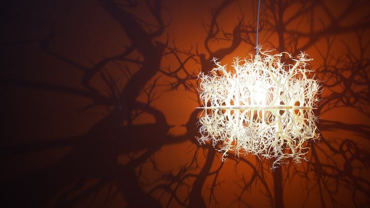 Forms in Nature chandelier