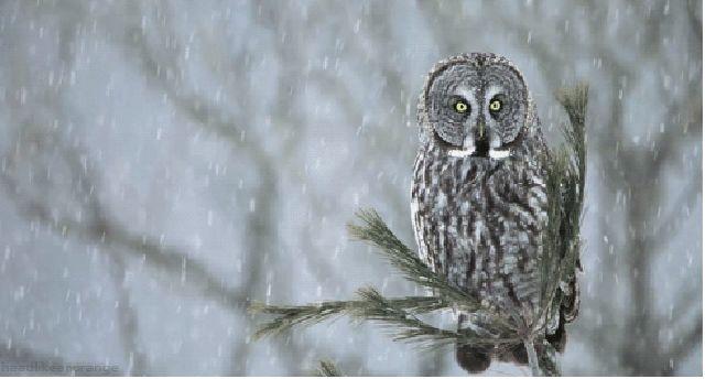 Fascinantes GIFs de la naturaleza animados