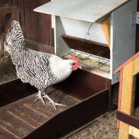 Kip bij een handige voerklep, doe-het-zelfplan uit Landleven.