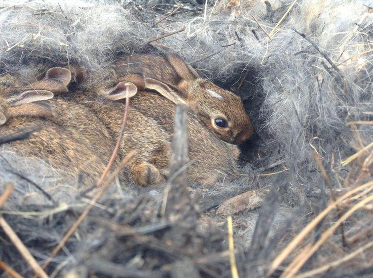 Утром мама нашла необычное гнездо возле дома