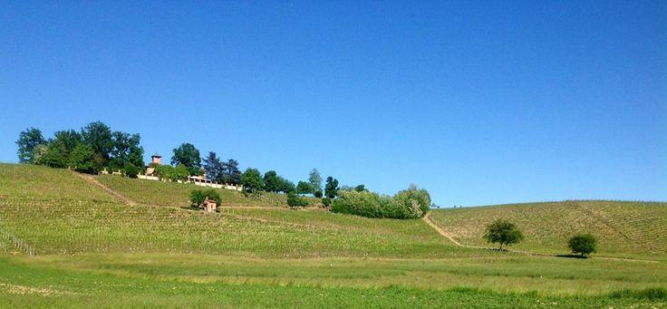 La collina di Villa Fiorita - Monferrato, Asti