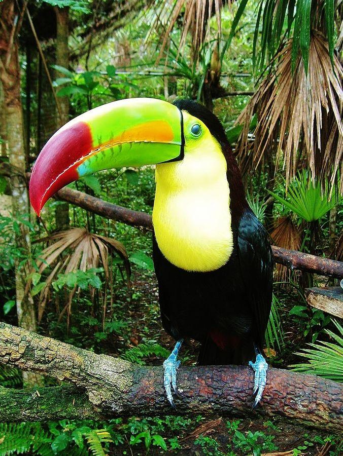 Toucan, Belize by Nathan Lemanski
