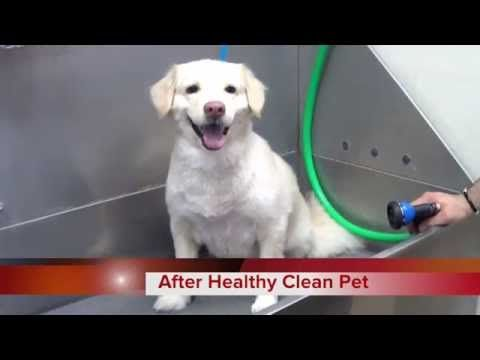 Youtube Dog Bath Dogs Dog Care Pets