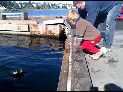 This is my son Lachlan feeding Lucy our resident seal.  Lucy lives one block east from the Guesthouse.  ; )