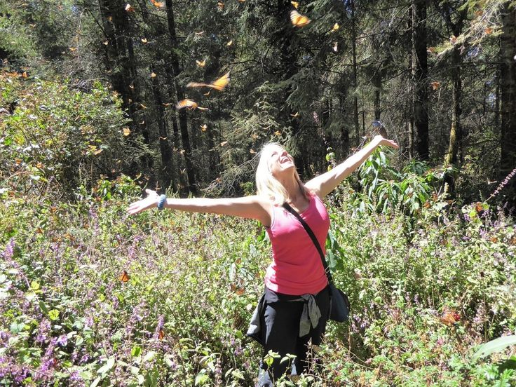 Morelia monarch butterflies