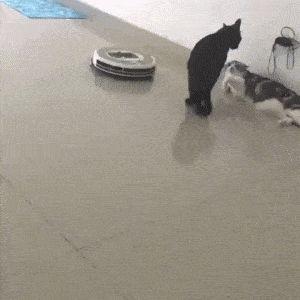 Jetzt stell dir vor, der Roboter ist ein Monster. Die schwarze Katze ist Annabeth. und der andere ist …   – Haha..hahaha…heho..ha..he..yaa…