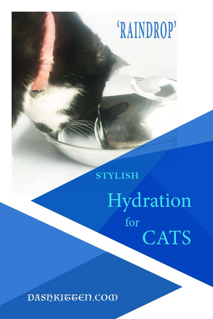 #ad Pet Hydration is critical all year sound, but especially in summer. Let us show you one of the coolest, most stylish cat drinking fountains around. Meet the ONE fountain that is purrfect for the lifestyle you lead, and the home you love.
