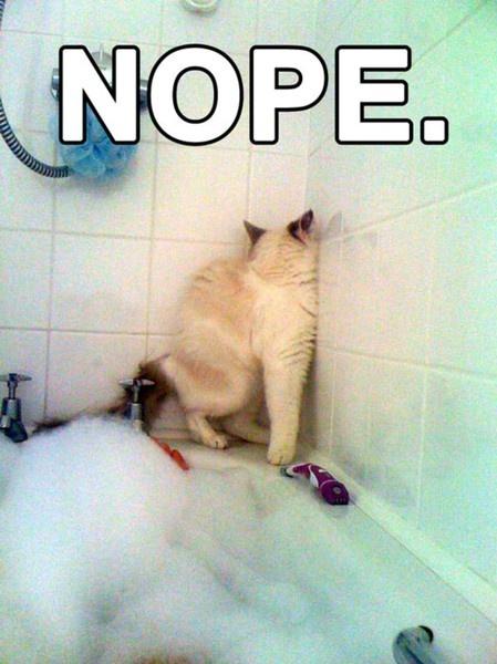 Cats hate baths theatrichaylie