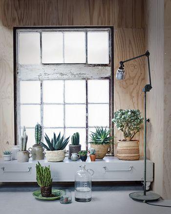 観葉植物とサボテンをミックスして飾れば、ちょっぴりエキゾチックな雰囲気に。植物の入れ物をナチュラルなもので統一しているので、まとまった印象になっています。