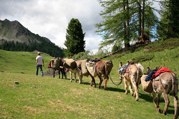 Randonnées avec les ânes dans le Queyras : le divin bol d'air!