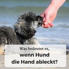 Was bedeutet es, wenn der #Hund die #Hand ableckt?