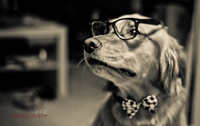 Hipster Dog by vu_le2, via Flickr