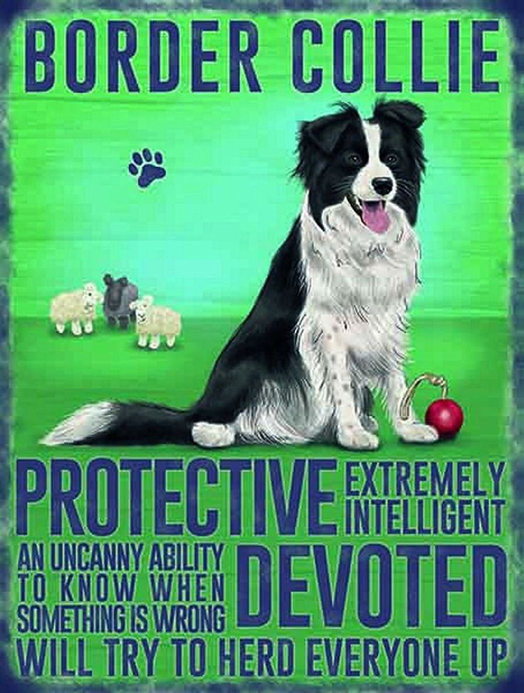 Vintage Style Retro Metal Wall Sign Dog Lovers Owners Gift Tin Pedigree Breeds BORDER COLLIE: Amazon.co.uk: Kitchen & Home