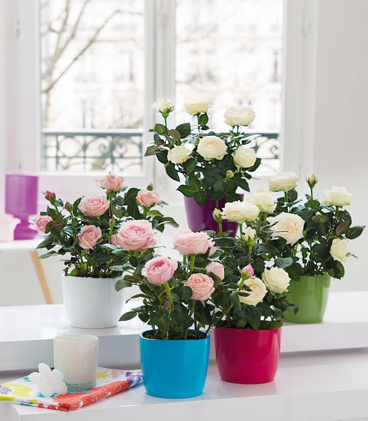 132 best images about truffaut plantes d 39 int rieur on - Plante d interieur ikea ...