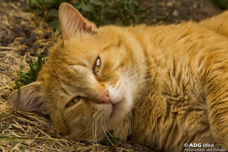 Posing cat...