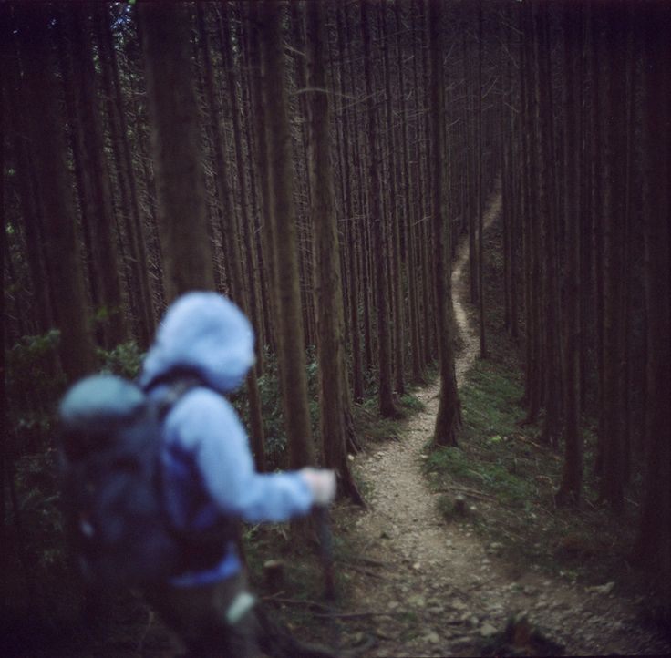 .: Adventure, Wood, Outdoor, Travel, Places, Road, Photo