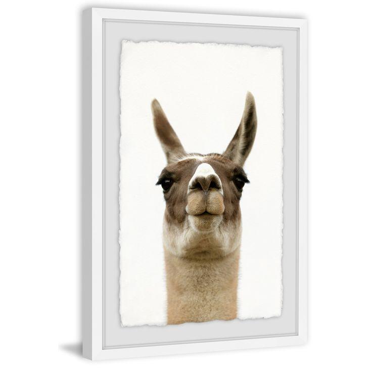 Best 25 Baby Llama Ideas On Pinterest: Best 25+ Llama Face Ideas On Pinterest