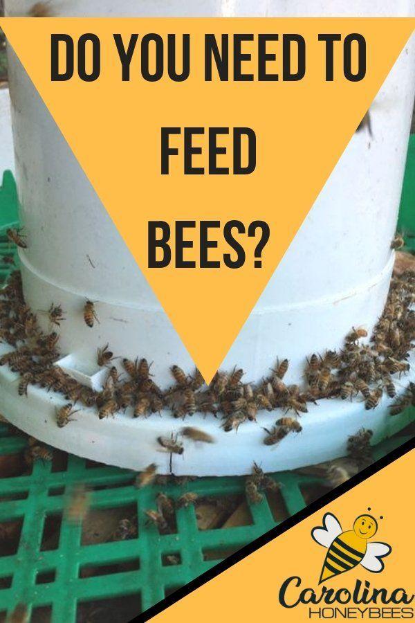 Feeding Bees Sugar Water How Why Carolina Honeybees Feeding Bees Bee Keeping Bee