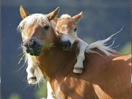 #Niezwykle uroczy #plakat na #ścianę z małym #koniem!
