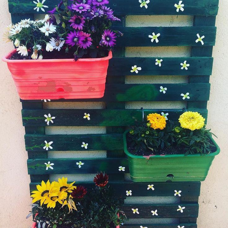 Palet decorado hace un año colgado por mi padre #huertourbanopiluki #palets #exteriores #decoracionfloral #decoracionvintage