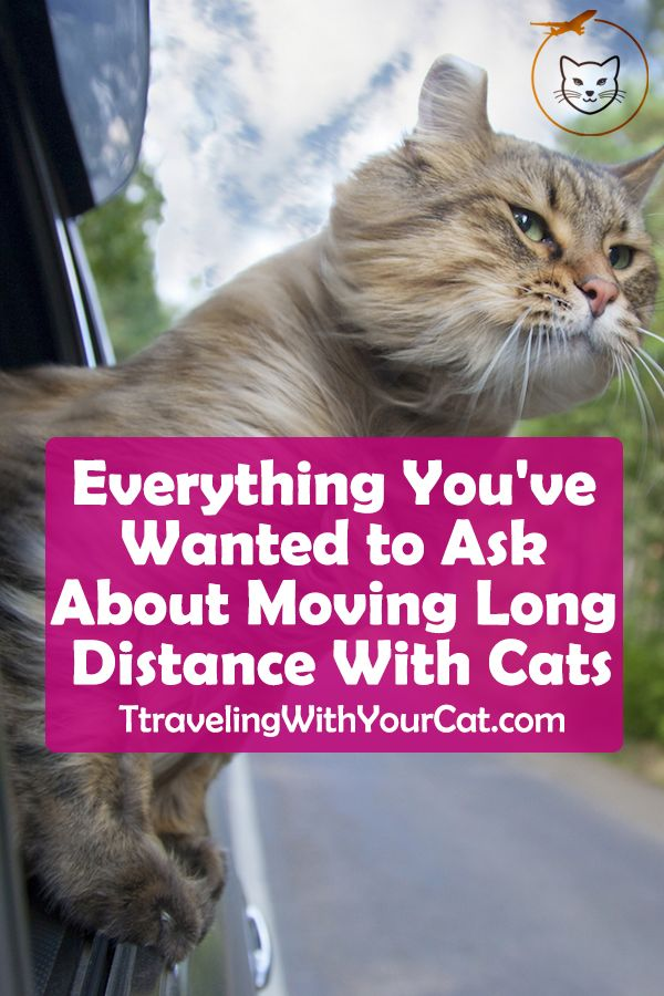 Everything You Ve Wanted To Ask About Moving Long Distance With Cats Moving Long Distance Cats Cat Travel
