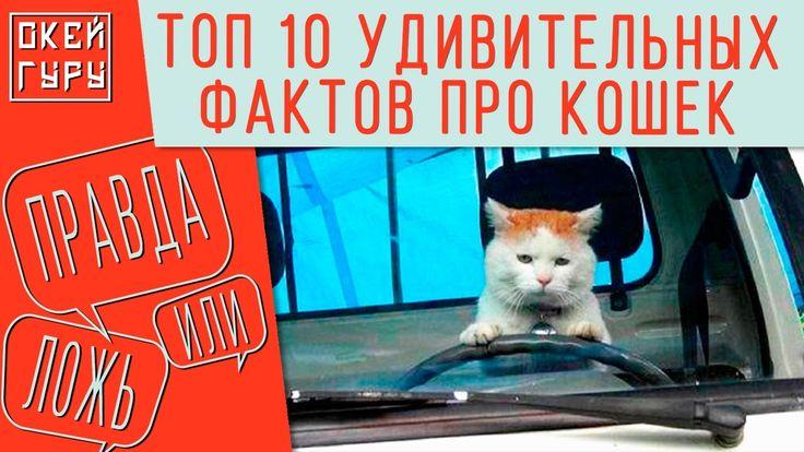 Игра ПРАВДА или ЛОЖЬ. ТОП 10 фактов про кошек.