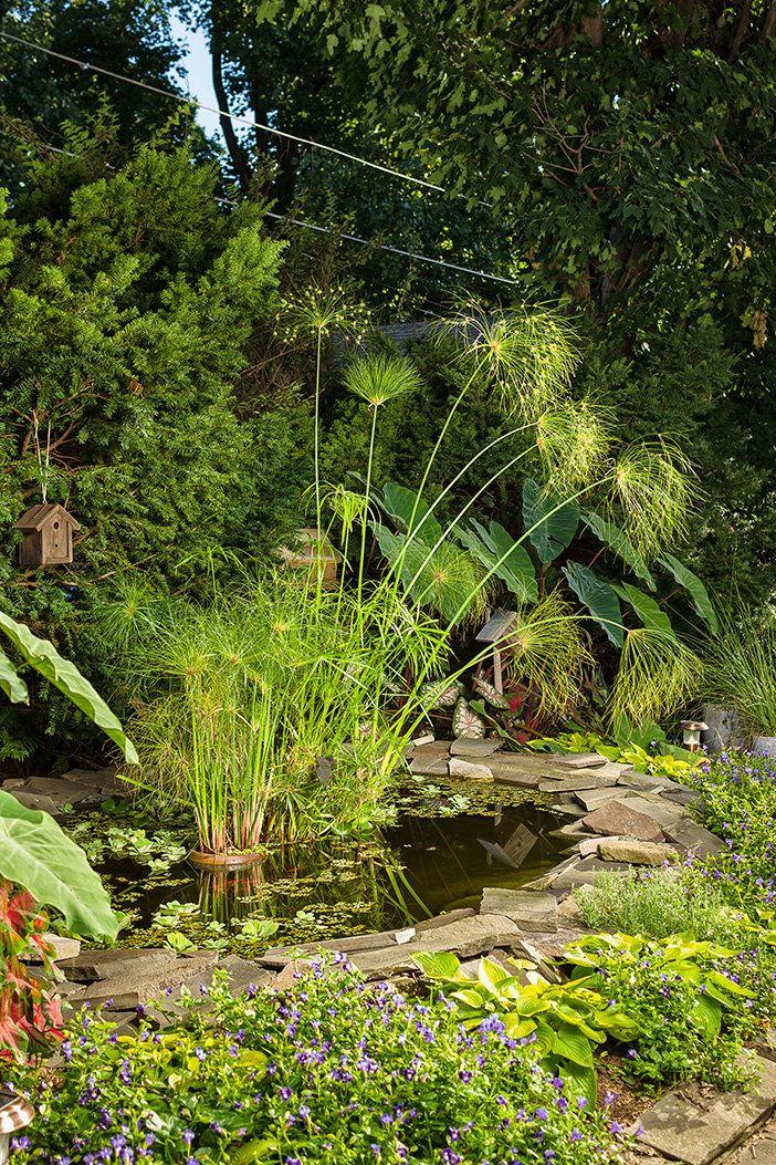 Graceful+Grasses®+King+Tut®+-+Egyptian+Papyrus+-+Cyperus+papyrus