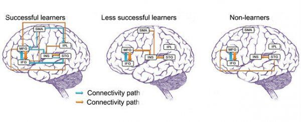Researchers from Penn State University in the US have found that learning a language will change the structure of your brain and make the network that pulls it all together more efficient - and the improvements can be experienced at any age.
