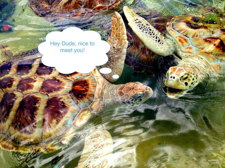 Grand Cayman - Unsere Reiseberichte: http://kidsoncruise.blogspot.de/2014/04/grand-cayman-hey-dude-400-banken-und.html