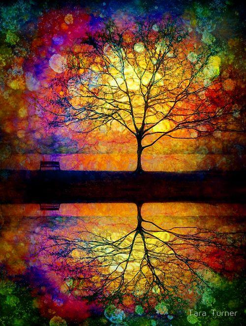 splendiferoushoney: Baum Farben Bunt